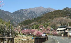 伊勢原のシンボル!丹沢大山のおすすめ観光スポット